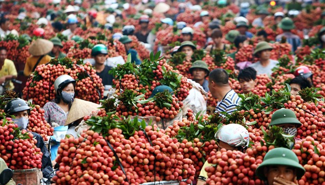 10_best-known_orchards_in_Vietnam_02