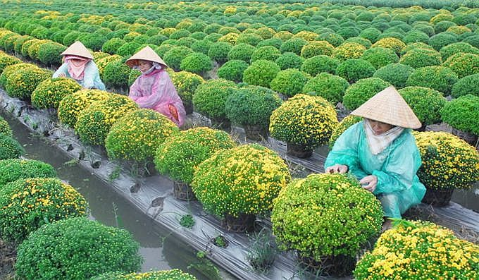 10_best-known_orchards_in_Vietnam_07