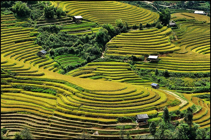 Autumn in bloom on Vietnam's rice terraces