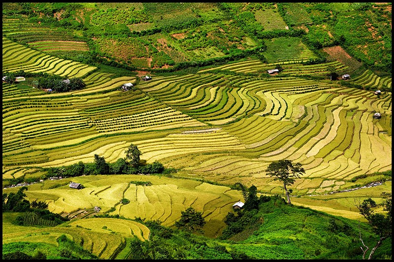 Autumn in bloom on Vietnam's rice terraces 3
