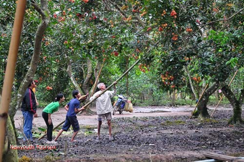 Ben_Tre_Province_Sweet_Aftertaste_Of_Coconut_Kingdom_06