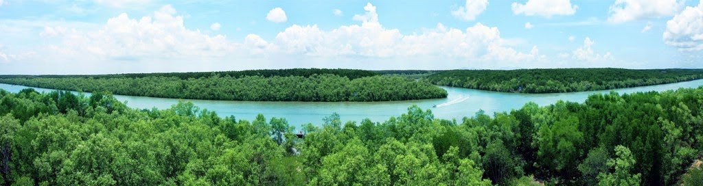 Can_Gio_Mangrove_Forest_-_top_venue_for_nature_lovers_07