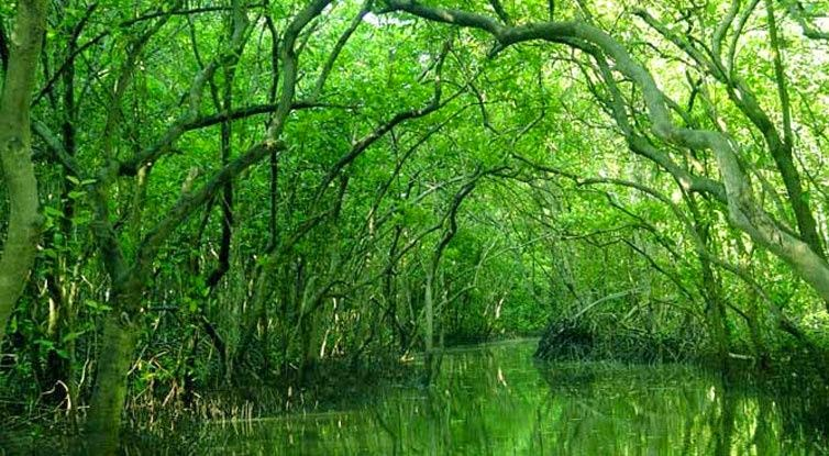 Can_Gio_Mangrove_Forest_-_top_venue_for_nature_lovers_08