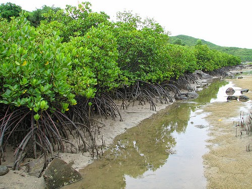 Can_Gio_Mangrove_Forest_-_top_venue_for_nature_lovers_11
