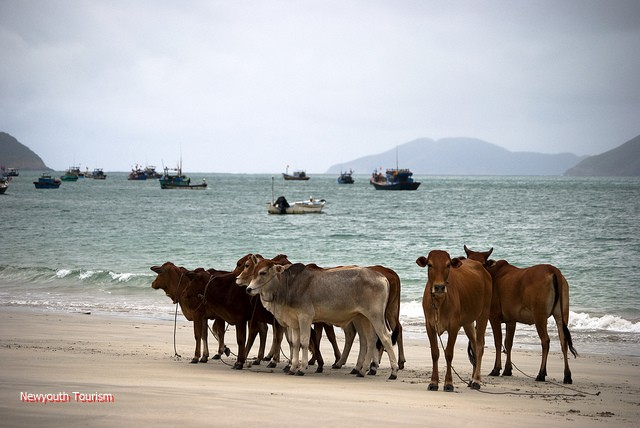 Con_Dao_among_the_top_25_remote_islands_06
