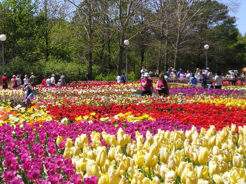 Dalat_promotes_citys_flower_brand_with_upcoming_festival_02
