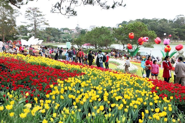 Dalat_promotes_citys_flower_brand_with_upcoming_festival_03