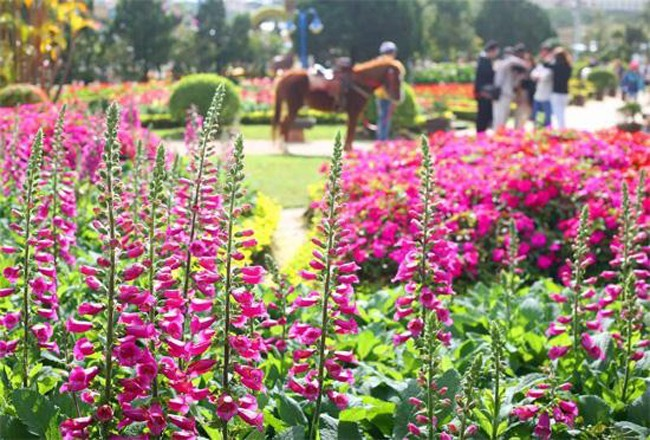 Dalat_promotes_citys_flower_brand_with_upcoming_festival_04