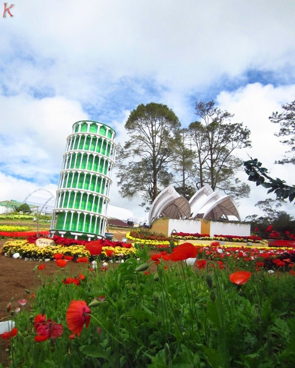 Dalat_promotes_citys_flower_brand_with_upcoming_festival_09