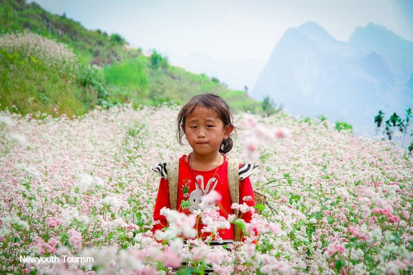 First_buckwheat_flower_festival_to_be_held_in_Ha_Giang_03