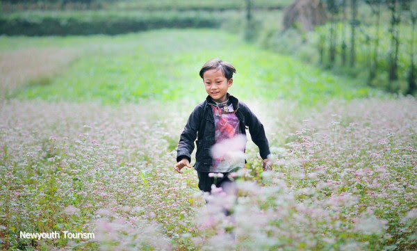 First_buckwheat_flower_festival_to_be_held_in_Ha_Giang_04
