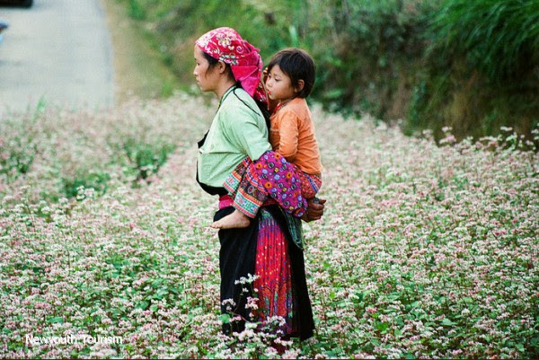 First_buckwheat_flower_festival_to_be_held_in_Ha_Giang_05