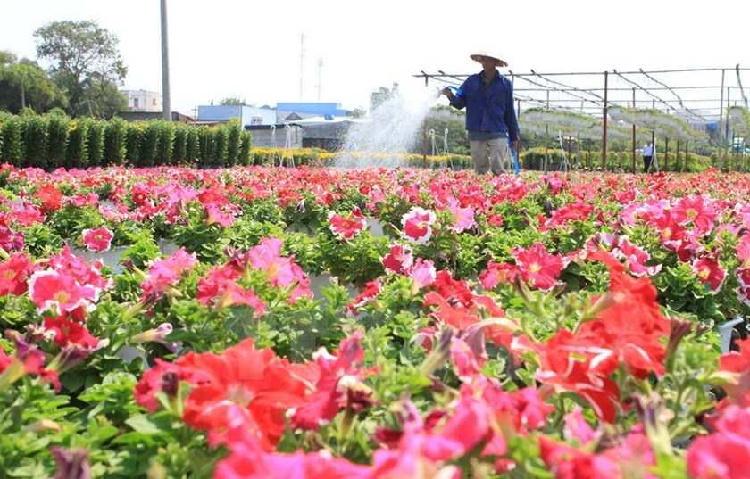 Flower_village_in_Ho_Chi_Minh_City_primed_for_Tet_holiday_season_01