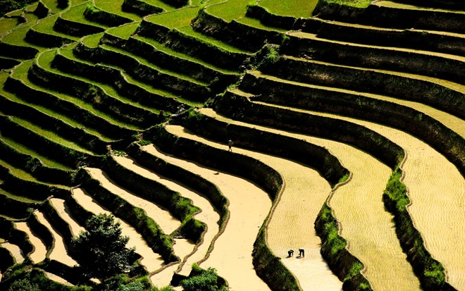 Hoang_Su_Phi_terraced_fields_in_rainy_season_02