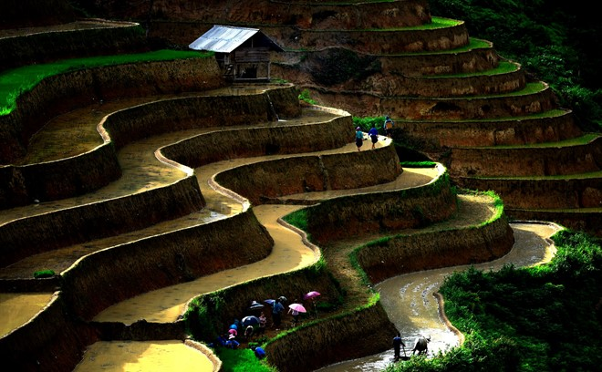 Hoang_Su_Phi_terraced_fields_in_rainy_season_03