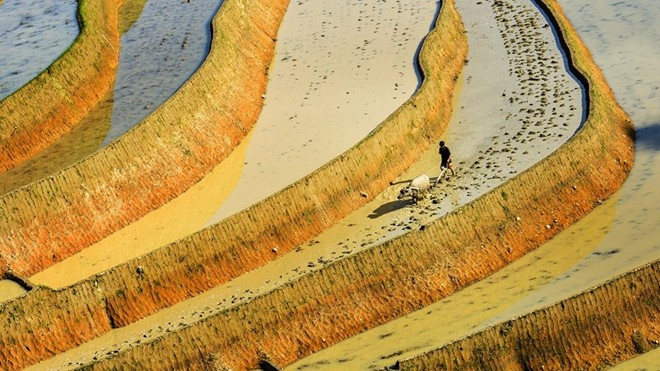 Hoang_Su_Phi_terraced_fields_in_rainy_season_11