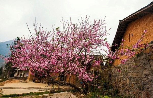 Its_springtime_again_in_Ha_Giang_02.jpg