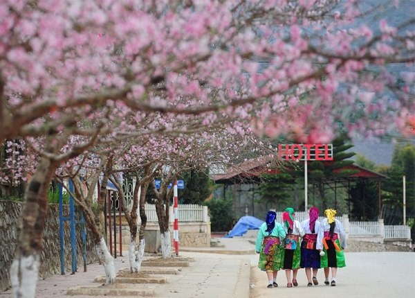 Its_springtime_again_in_Ha_Giang_10