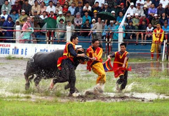 Thousands of people walked through pouring rain to a stadium in the northern beach town of Đồ Sơn, Hải Phòng Province,Vietnam to attend the annual buffalo-fighting festival that dates back to the 18th century. 2
