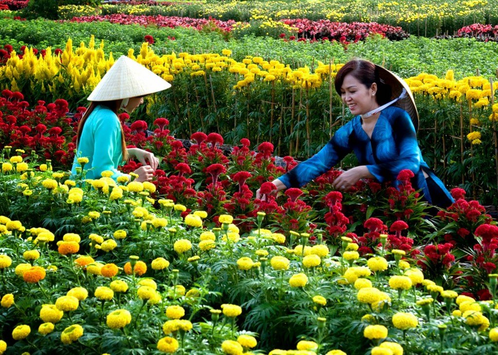 Sa_Dec_Flower_Gardens_in_Mekong_delta_Vietnam_03