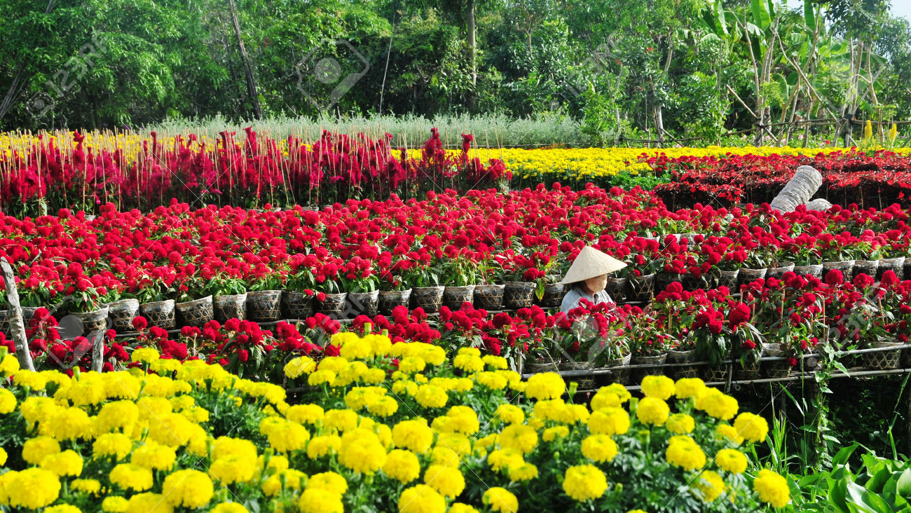 Sa_Dec_Flower_Gardens_in_Mekong_delta_Vietnam_08
