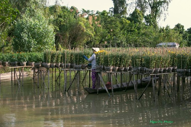 Sa_Dec_Flower_Gardens_in_Mekong_delta_Vietnam_09