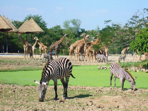 vietnam-first-ever-safari-zoo-set-for-xmas-opening-on-phu-quoc-island_06